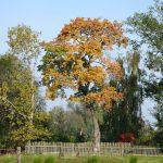 Baum mit orangen  Blättern